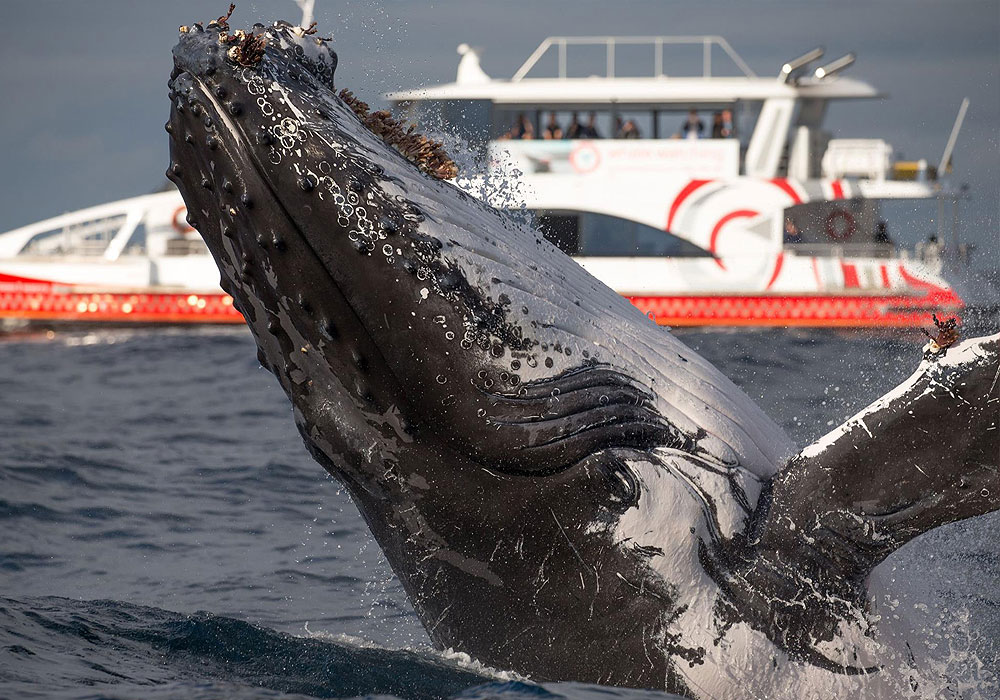 Whale Watching, 3hr Discovery Cruise